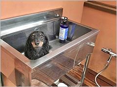 愛犬と癒しのアジアンリゾート 海宿 太陽人 width=