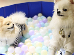 ゆとりろ蓼科ホテル with DOGS width=
