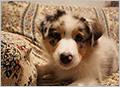 愛犬の宿 ラブリー・ワンズ