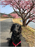 愛犬と癒しのアジアンリゾート 海宿 太陽人